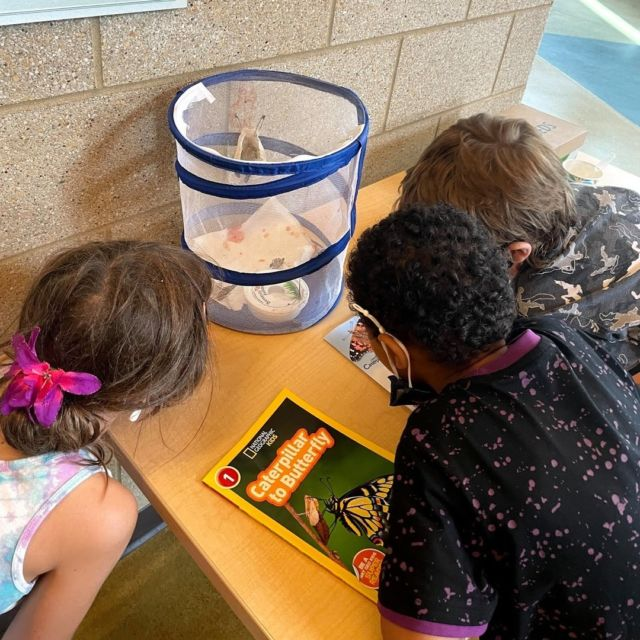 This summer at the Boys & Girls Club of Menasha members got to experience the metamorphosis of caterpillar to butterfly. After the caterpillars turned into butterflies, youth were able to help release them into nature!  #GreatFuturesStartHere